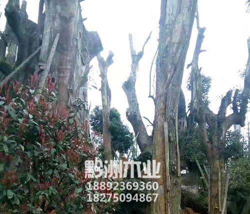 贵州进口原木供应商