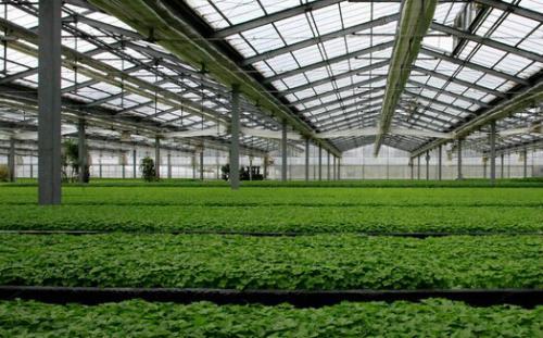 郑州玻璃温室大棚