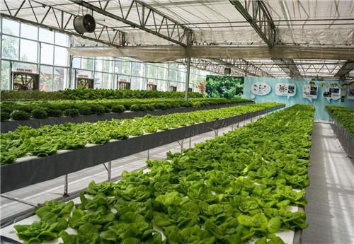 庭院温室生产厂家