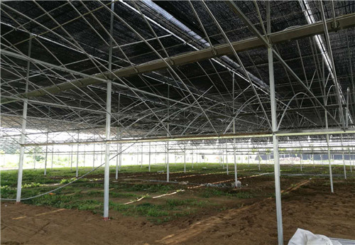 河南阳光板温室建造