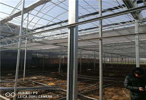 河南日光温室建设