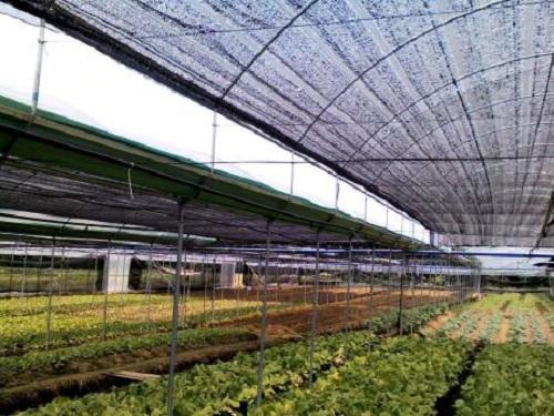 河南智能温室建设