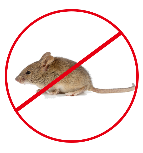 天津专业杀老鼠
