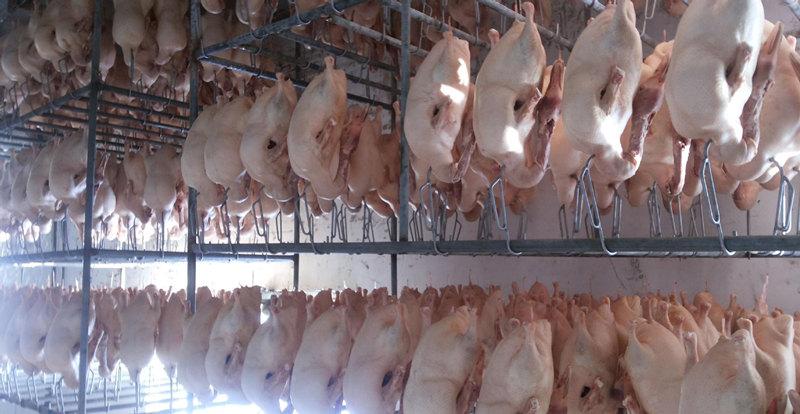 唐山填鸭胚加工厂