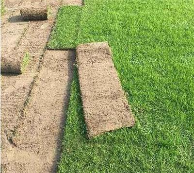 河南園林綠化草坪