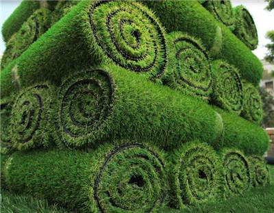 河南草坪批发种植基地
