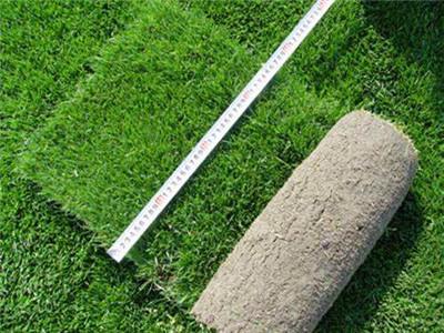 郑州草坪批发