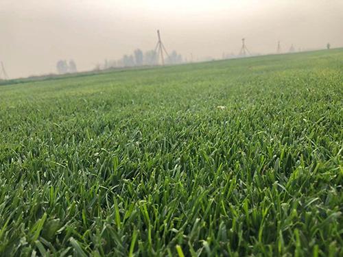 混播草基地