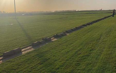 中牟草坪基地