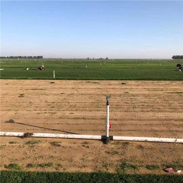 河南草坪培育基地