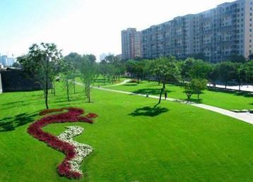 郑州草坪批发:马尼拉草坪