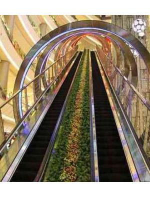 興義扶手電梯