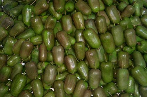 辽宁软枣猕猴桃价格