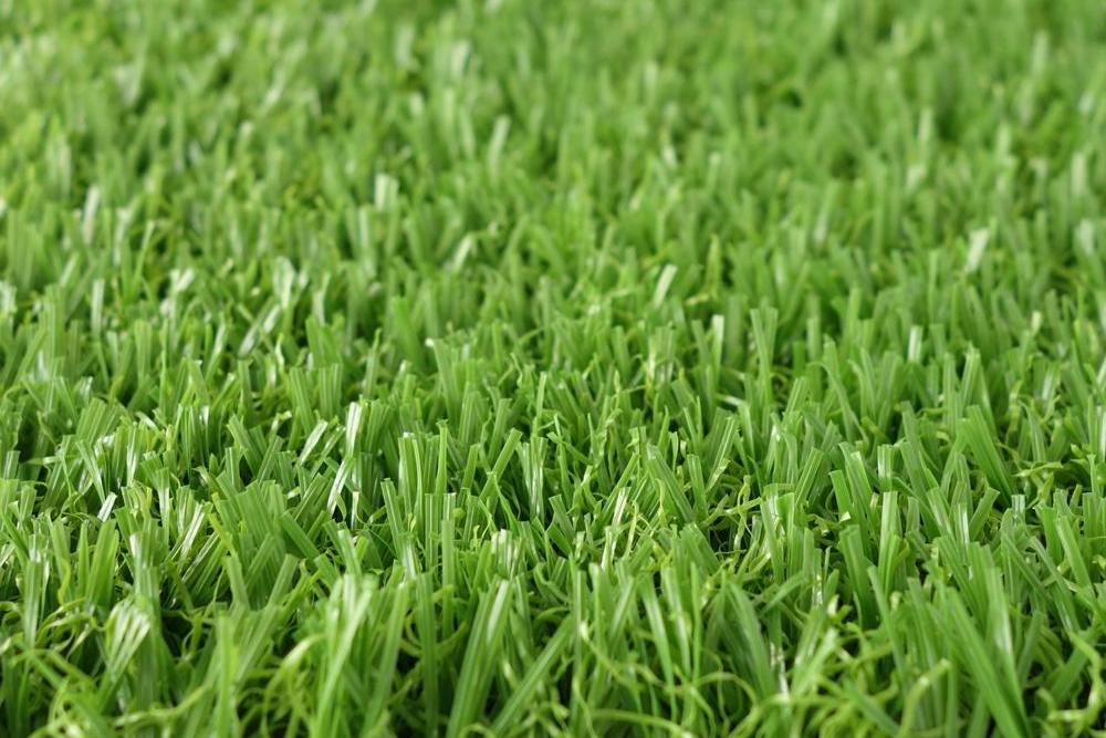 郑州草坪厂