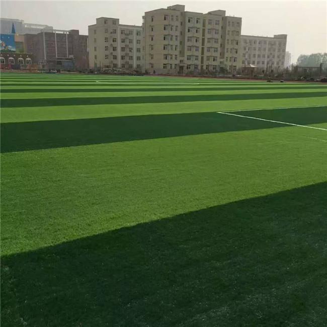 郑州草坪厂家