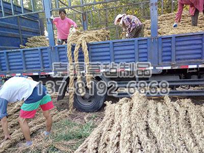 草棒多少钱一斤