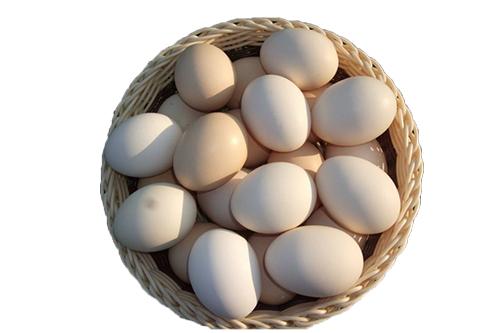 无公害富硒鸡蛋