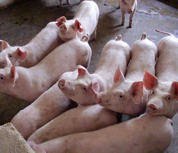 微生物饲料添加剂厂家