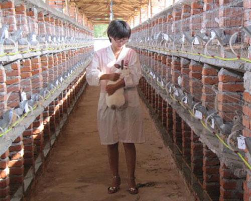 兔子养殖网