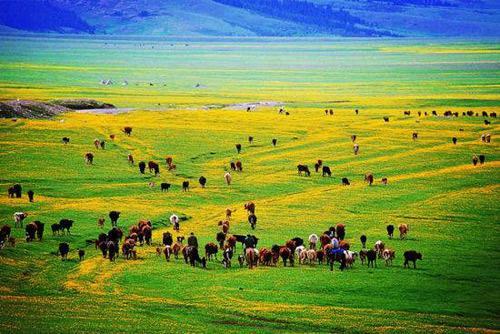 新疆旅游网站