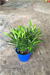 办公室植物租赁