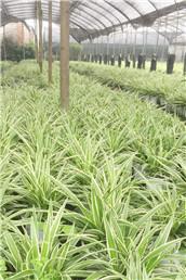 四川植物租赁厂家