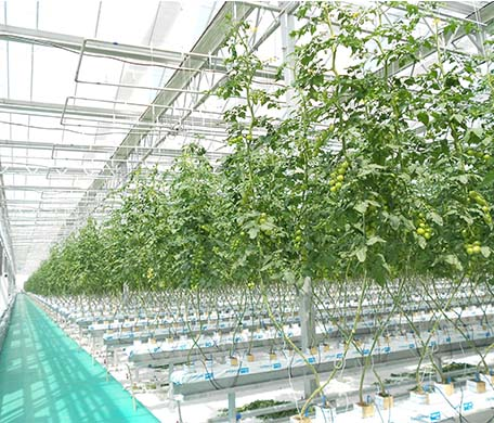 临沂荷兰模式无土栽培