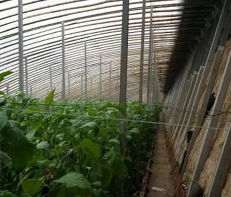 立柱式冬暖温室大棚