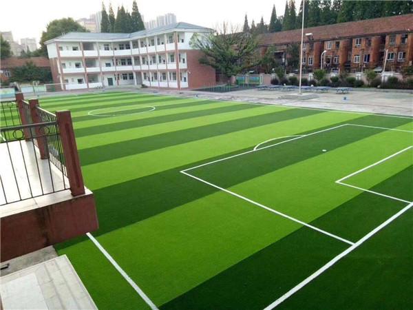运动场草坪