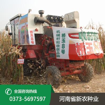 玉米杂交种