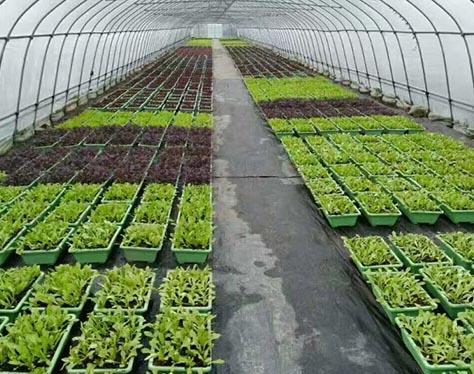 蔬菜栽培基质