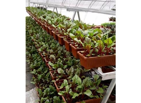 无土栽培专用基质生产厂家