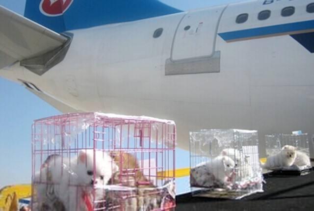 宠物运输公司哪家好