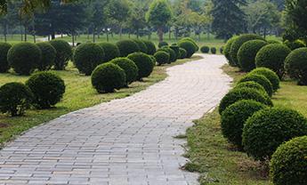 山东绿化工程