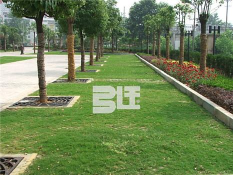 植草地坪施工