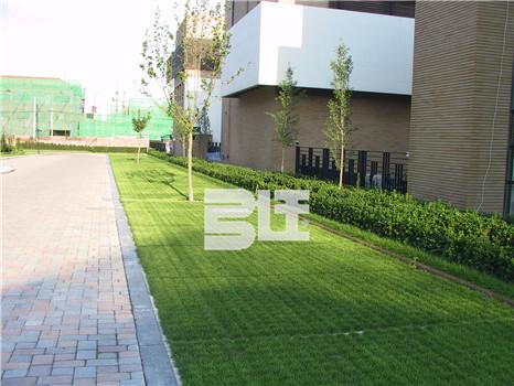 生态植草地坪