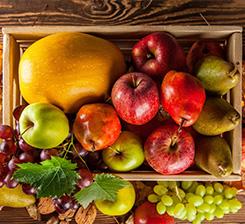 水果有机肥厂家