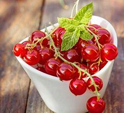 槁城水果有機肥