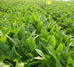 石家莊蔬菜有機肥廠家