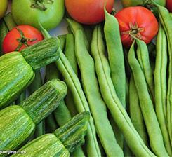 蔬菜有機肥