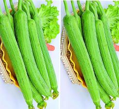 蔬菜用什麽肥料