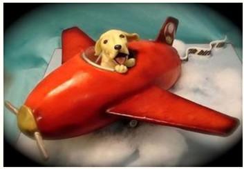 天津宠物空运公司