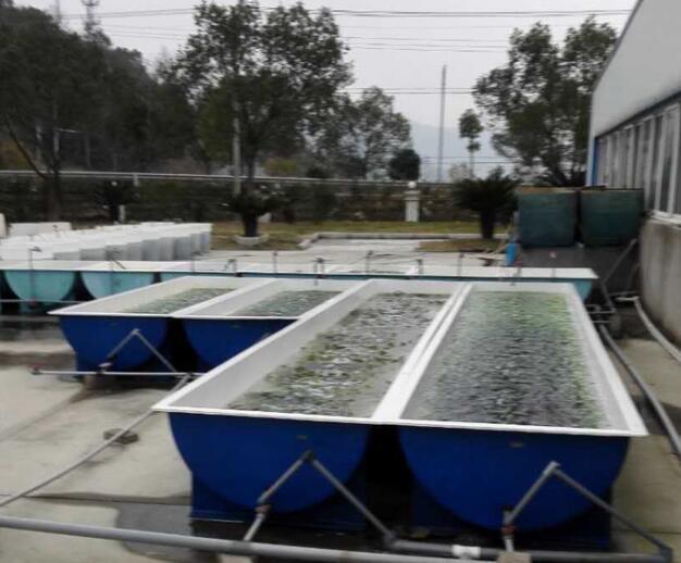 玻璃钢养殖水槽