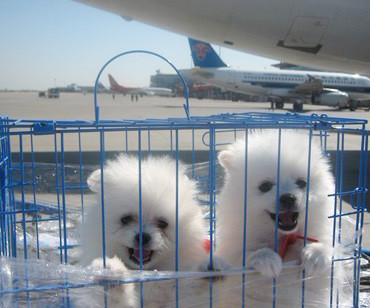 成都宠物空运公司