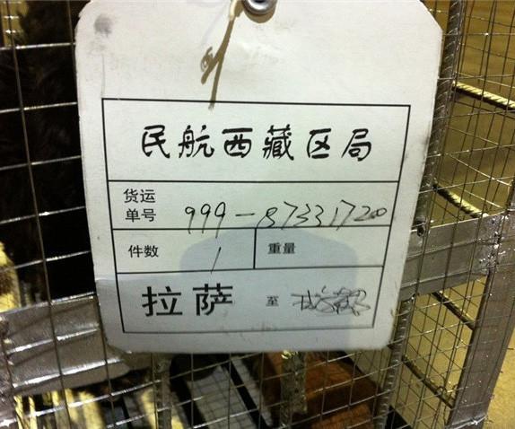 狗狗空运价格