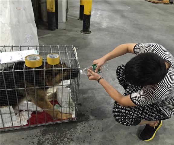 國內寵物空運