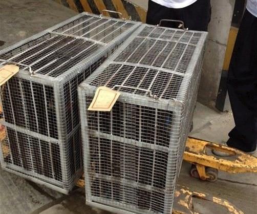 四川寵物空運價格