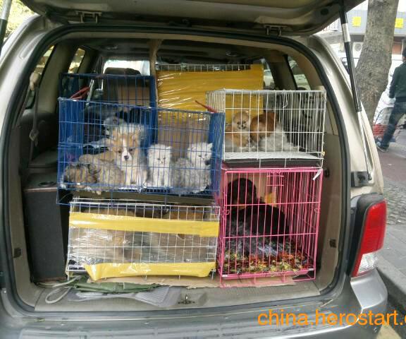 成都小动物运输价格