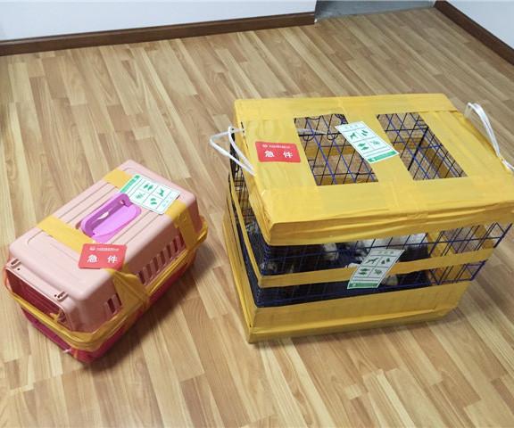 四川寵物托運價格
