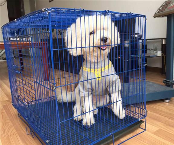 四川小动物托运公司
